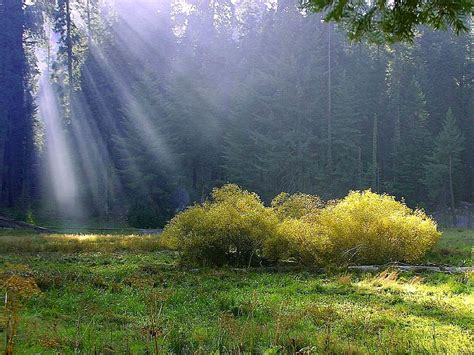 In The Meadow file rays on the meadow jpg wikimedia commons