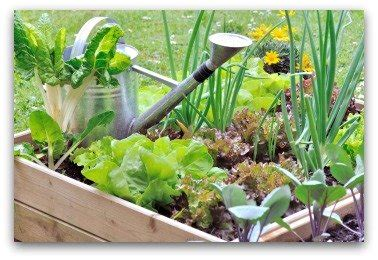Raised Bed On Patio Small Vegetable Garden Plans And Ideas