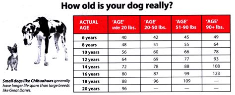 puppy age new more accurate age chart from tufts premium blend premium blend