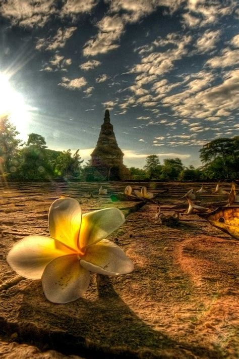 wallpaper iphone 6 thailand light landscapes nature flowers thailand mai afternoon