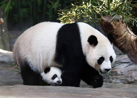 imagenes de animales nuevas especies animales en peligro de extinci 243 n en ecuador