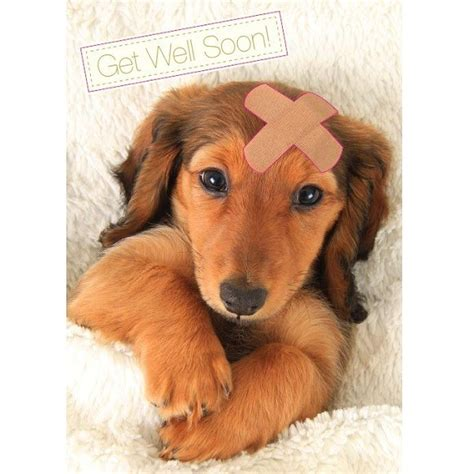 get well soon puppy get well soon card greetings cards cards foundation