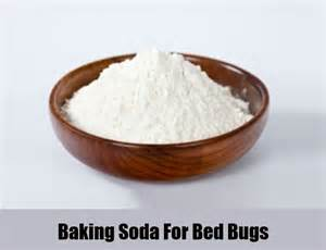 how to bed bugs home remedies best herbal remedies for bed bugs apps directories