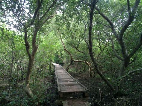 coringa forest  hope island   top