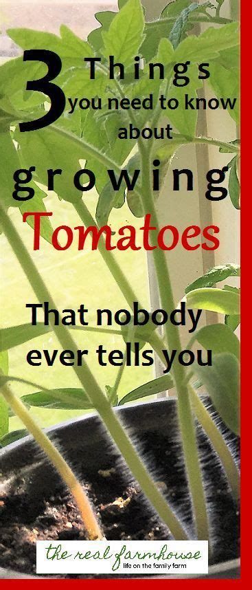 tomatoes have you heard of these tips and advice on why haven t i heard of these things so good to know for