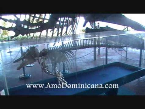 andreita putita de santo domingo acuario nacional santo domingo version fotos youtube