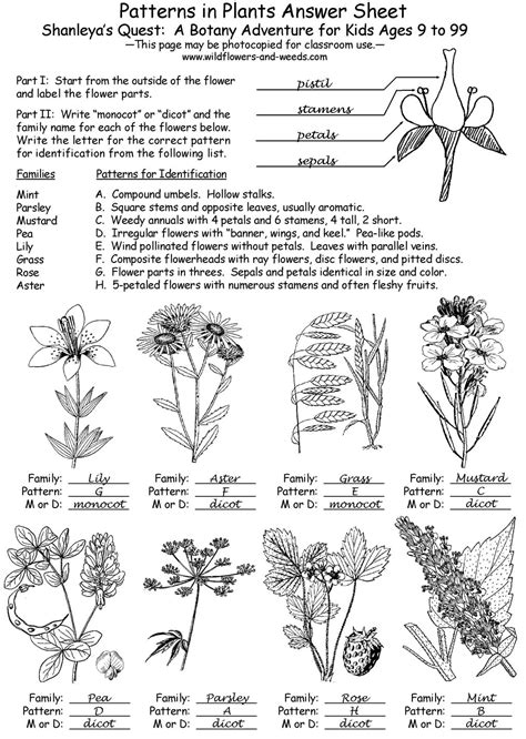 learning pattern quiz shanleya s quest a botany adventure for kids ages 9 to 99