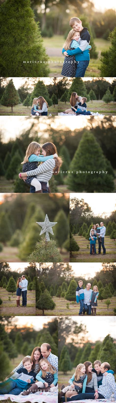 28 best christmas tree farm houston tx christmas tree