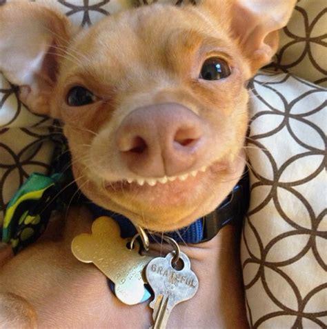 Dog Teeth Meme - s 228 oot just hyv 228 sellasena kuin s 228 oot muistuttaa