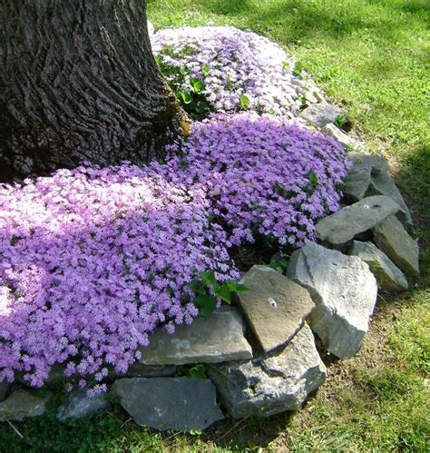 Landscaping Ideas Around Trees 12 Best Images About Interesting Design Ideas For The Area Around Trees On Pinterest Trees