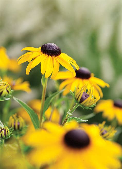 flowers and plants 20 best perennial flowers sunset