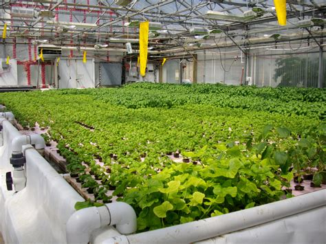 backyard growing system what is hydroponics hydroponic history hydroponiacs blog
