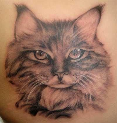 cat tattoo artist sci meow cats with tattoos or tattoos of cats