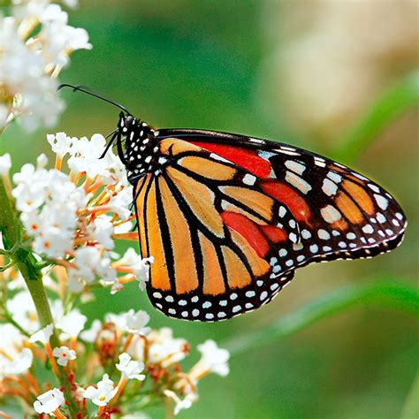 Planting A Flower Garden by Plant A Butterfly Garden