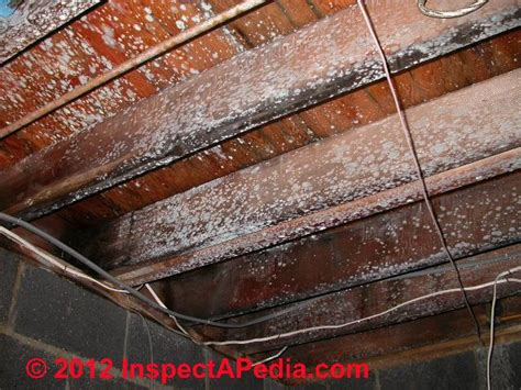 How To Remove Fungus From Furniture by How Do I Remove Mold Mildew From A Wood Subfloor Ehow 2015
