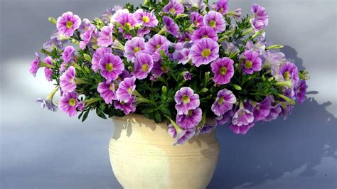 Images Of Flower Vases by Flower Vase Wallpaper