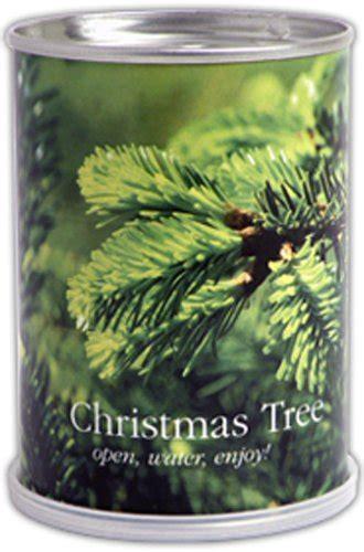 Tannen Selber Ziehen by Macflowers Weihnachtsbaum Aus Der Dose Meinhaushalt At