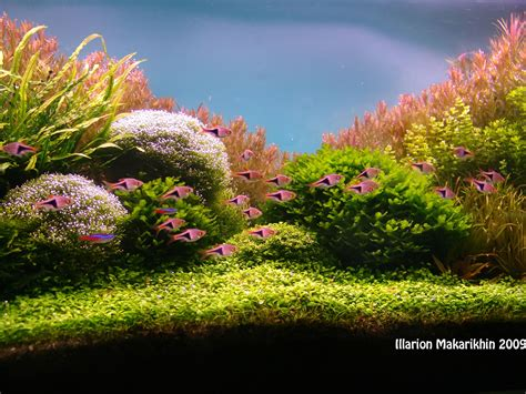 aquascaping plants 1000 images about garden aquascape on pinterest