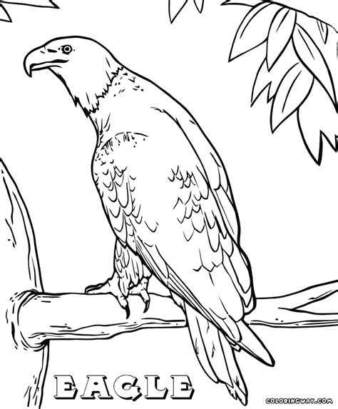 eagle scout coloring page eagle scout coloring pages coloring pages