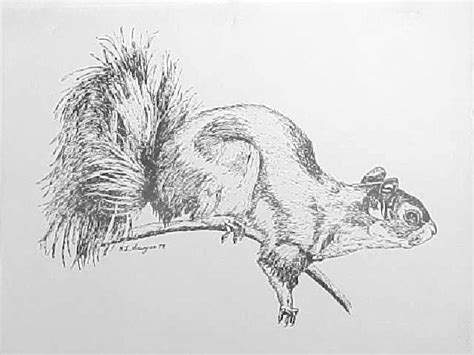 Drawings Of Animals by India Ink Drawings Animals