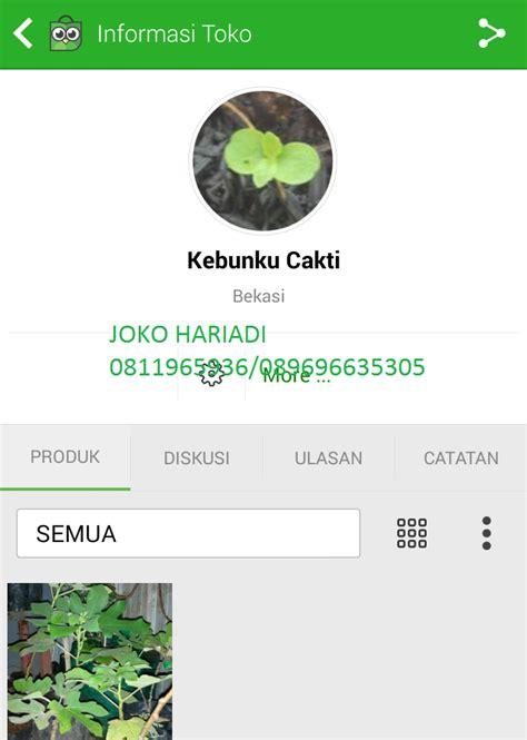bibit kurma di indonesia bibit buah tin di bekasi