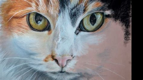 cat painting tips pansy cat painting drawing in pastel step by step