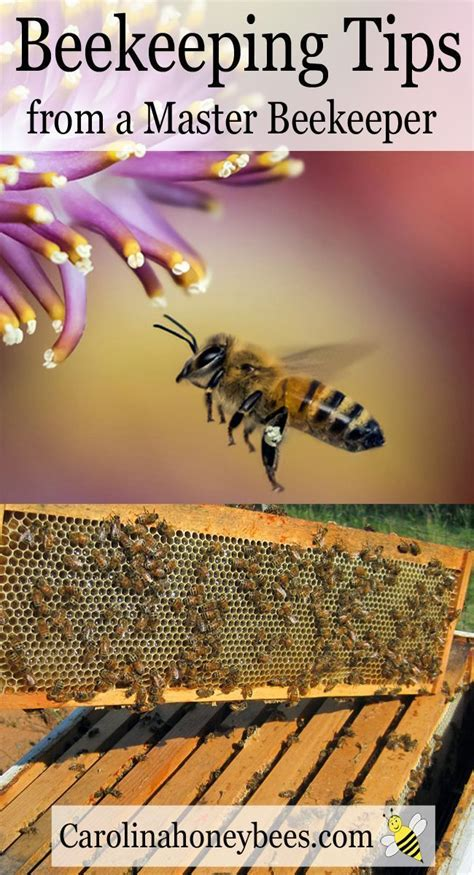 raising bees in backyard best 25 farm layout ideas on pinterest
