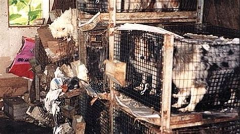 california puppy mill make puppy mills illegal in california notices