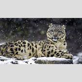 Wallpaper Snow ...