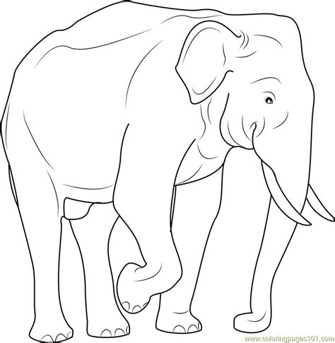 Indian Elephant Coloring Page | free coloring pages of indian elephant