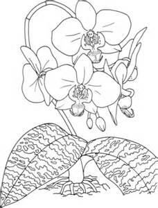 Ausmalbilder Zum Drucken Malvorlage Orchidee Kostenlos 2 sketch template
