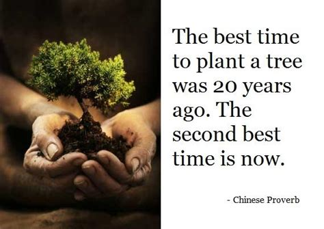 When Is The Best Time To Plant A Vegetable Garden Quot The Best Time To Plant A Tree Was 20 Years Ago The