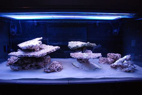 saltwater aquarium aquascape aquascaping show your skills page 7 reef central