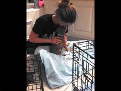 Treating Parvo At Home by 9 Parvo Pups Home Treatment