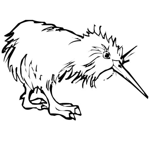 coloring page kiwi bird image gallery kiwi coloring page