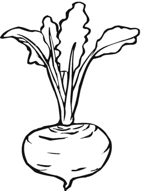beetroot 7 coloring page super coloring lettuce turnip