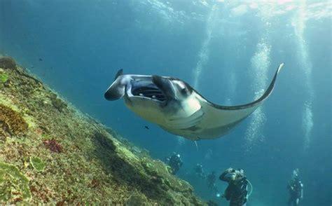 safest boat to nusa penida lembongan diving center picture of lembongan dive center