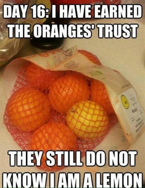 Lemon Memes - funny fruit 05
