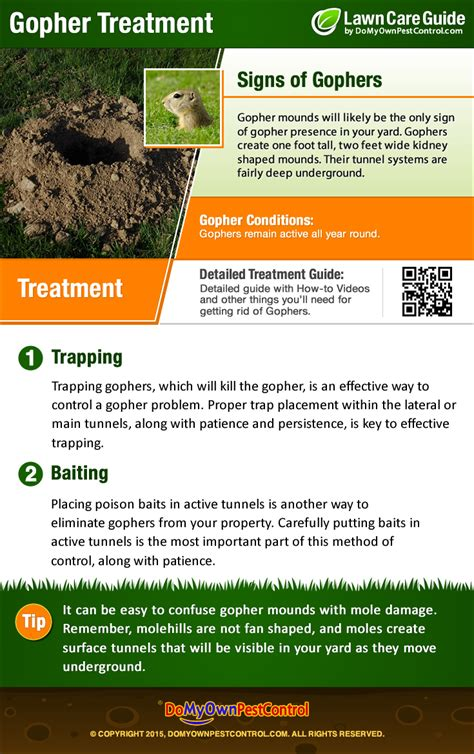 how to get rid of gophers in your backyard how to get rid of gophers control treatment
