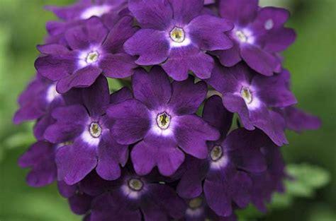 Top 10 Purple Plants For Your Flower Garden Birds And Blooms Purple Garden Flowers