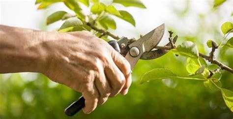 la poda pruning 8467703059 t 233 cnicas para la poda de frutales c 237 tricos revista infoagro m 233 xico