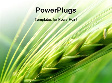 agriculture powerpoint templates grain in the field powerpoint template background of