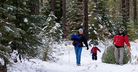 christmas tree permits in el dorado ca spot el dorado county tree permits