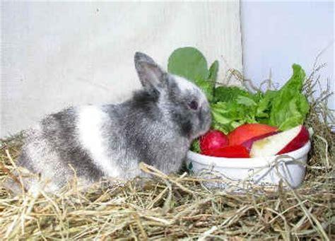 alimentazione conigli alimentazione coniglio nano