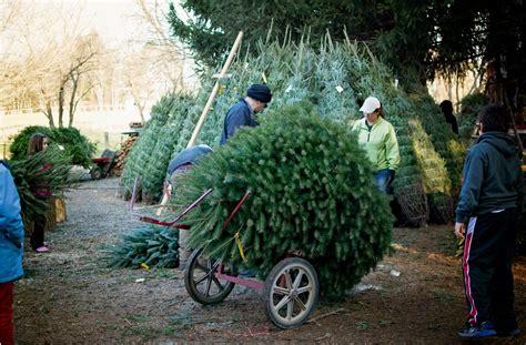 largest christmas tree farms run tree farm lebanon s largest choose cut tree farm
