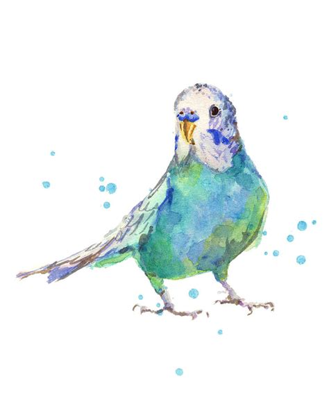 bertie wonderblue the budgie painting by alison fennell
