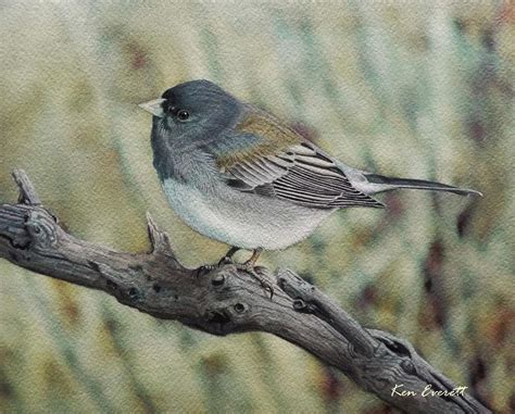 slate colored junco slate colored junco painting by ken everett