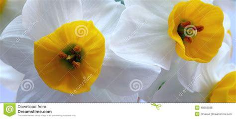 nome fiori bianchi nomi fiori bianchi e gialli stratfordseattle
