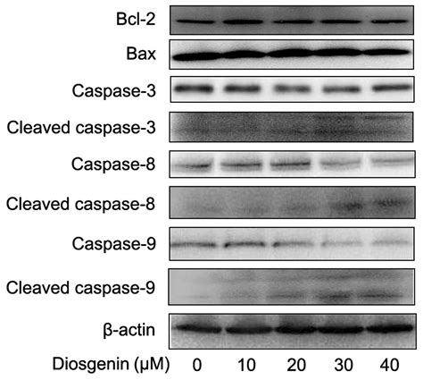24 h protein diosgenin induces g2 m cell cycle arrest and apoptosis in