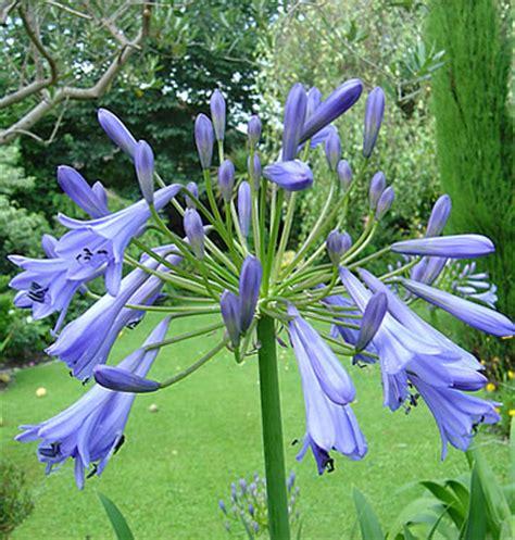 Winterharte Blumen Die Lange Blühen 120 by Pflanzenfamilie